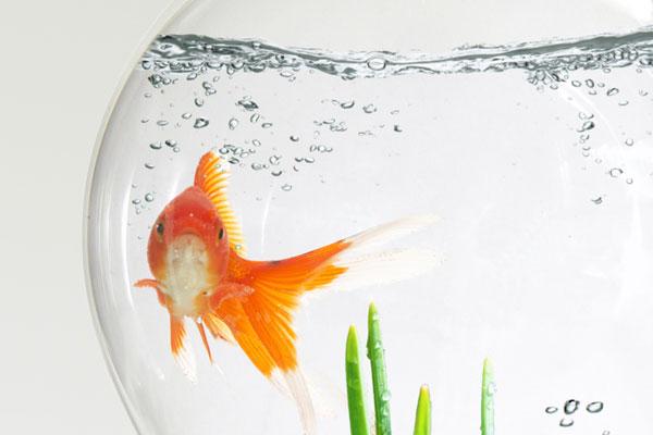 Wie kommt der Fisch in die Glühbirne?